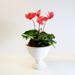 Classic Cyclamen from Hafner Florist in Sylvania, OH