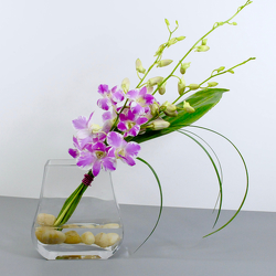 Simply Orchids from Hafner Florist in Sylvania, OH