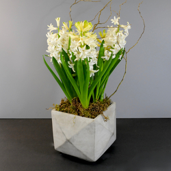 Spring Hyacinth from Hafner Florist in Sylvania, OH