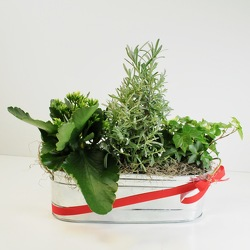 Holiday Planter from Hafner Florist in Sylvania, OH