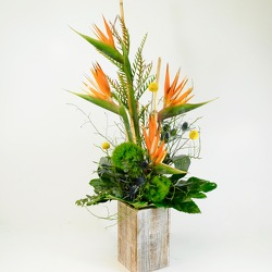 Birds of Paradise from Hafner Florist in Sylvania, OH