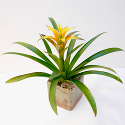 Tropical Bromeliad from Hafner Florist in Sylvania, OH