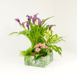 Garden Planter from Hafner Florist in Sylvania, OH