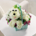 Precious Puppy from Hafner Florist in Sylvania, OH