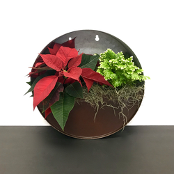 Poinsettia Planter from Hafner Florist in Sylvania, OH