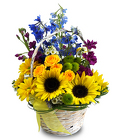 Ray of Sunshine from Hafner Florist in Sylvania, OH