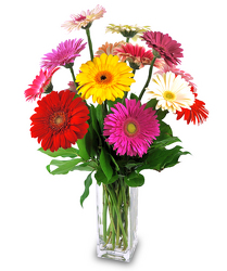 Delightful Daisies from Hafner Florist in Sylvania, OH