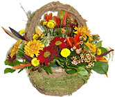 Autumnal Delight from Hafner Florist in Sylvania, OH