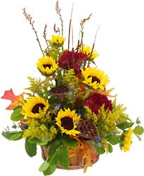 Sunflower Sunshine  from Hafner Florist in Sylvania, OH