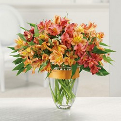 Awesome Alstroemeria  from Hafner Florist in Sylvania, OH