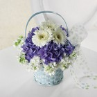 Baby Blue Basket from Hafner Florist in Sylvania, OH